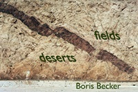 deserts and fields